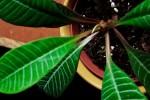 Projects-Plantita-4