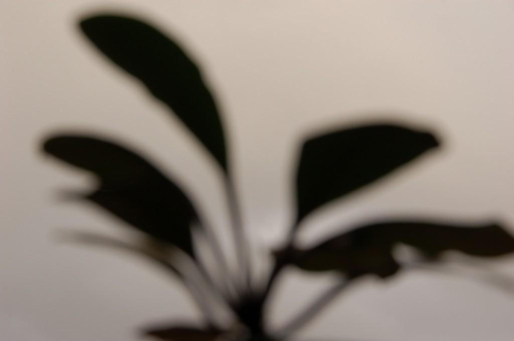 Projects-PlantitaOriginal-1