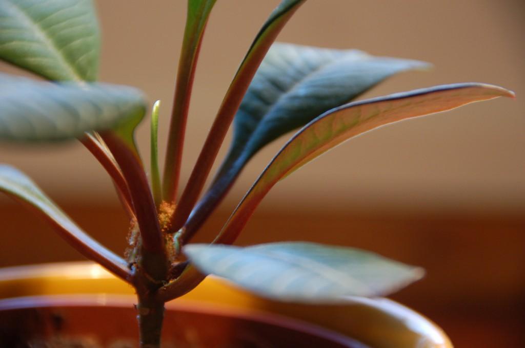 Projects-PlantitaOriginal-3