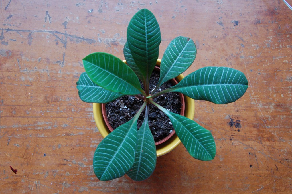 Projects-PlantitaOriginal-5